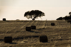 Haystack field Royalty Free Stock Photos