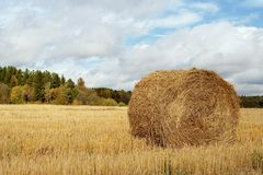 Haystack in the field Stock Image
