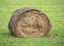 Haystack on the field Stock Image