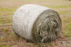Haystack on the field Royalty Free Stock Photos
