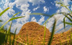 Haystack in a field against a blue sky summer Royalty Free Stock Photography