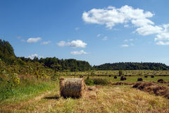 Haystack in the field. Coil. Haystack in the field. Coil of hay.  Panorama. The rural landscape. Autumn, harvest. Mowed hay. Farmland. Mowed grass Stock Photo