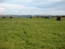 Haystack and field of green grass Stock Photos