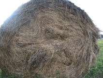 Haystack and field of green grass Stock Photo