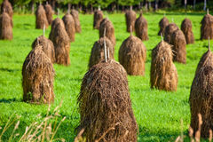 Haystack on field Royalty Free Stock Photo