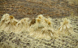 Haystack in the field Royalty Free Stock Images