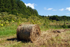 Haystack in the field. Mowed hay. Haystack in the field. Coil of hay.  Panorama of rural beauty. The rural landscape. Autumn, harvest. Mowed hay. Farmland Royalty Free Stock Images