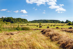Haystack in the field.  Panorama of rural beauty. Haystacks in the field. Coil of hay.  Panorama of rural beauty. The rural landscape. Autumn, harvest. Mowed Stock Photography