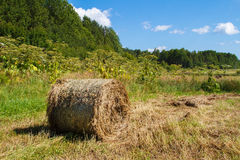 Haystack in the field.  Panorama of rural. Haystack in the field. Coil of hay.Panorama of rural beauty. The rural landscape. Autumn, harvest. Mowed hay Stock Photography