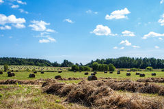 Haystack in the field.  Rural. Haystacks in the field. Coil of hay.  Panorama of rural beauty. The rural landscape. Autumn, harvest. Mowed hay. Farmland. Mowed Stock Image