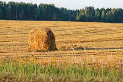 Haystack on a field in Russian countryside Royalty Free Stock Photos