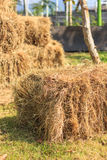 Haystack in field Stock Images