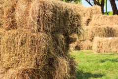 Haystack in field Royalty Free Stock Images
