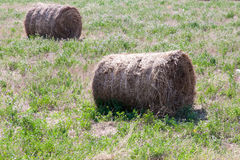 Haystack in the field , summer day Stock Photography