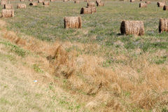 Haystack in the field,summer day Royalty Free Stock Images
