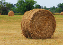 Haystack on the field. US Royalty Free Stock Photo
