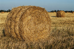 Haystack in a field of wheat Stock Photo