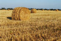 Straw Haystacks on the grain field Stock Images