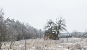 Haystack on the field during the winter. Winter sadness. Stock Photo
