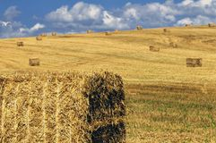 Haystack on a filed. Haystacks on the filed in summer day Royalty Free Stock Image