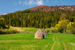 Haystack on a grassy meadow among the forest. In mountains. lovely rural scenery in springtime Stock Photography