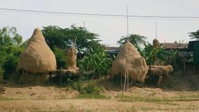 Haystack, group of haystacks stock footage
