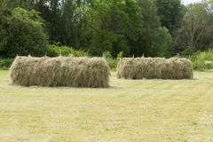 Haystack. Hay is stored to dry on sticks Royalty Free Stock Photography