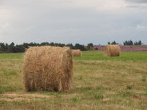 The haystack. S on the field in summer Stock Photography