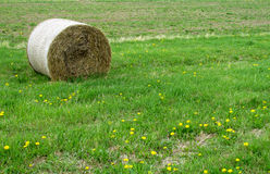 Haystack lying on green grass Stock Image