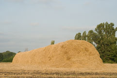 Haystack on the meadow. In sunny day Royalty Free Stock Photography