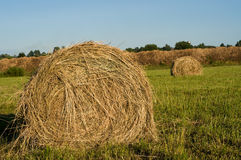 Haystack on the meadow. In sunny day Stock Image
