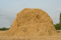 Haystack on the meadow. In sunny day Stock Photography