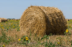 Haystack on the meadow. In sunny day Royalty Free Stock Photo