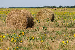 Haystack on the meadow. In sunny day Royalty Free Stock Image