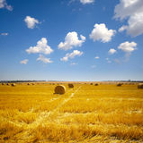 Haystack on the meadow Royalty Free Stock Photo
