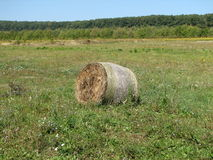 Haystack on meadow Royalty Free Stock Photo
