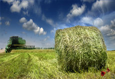 Haystack on the meadow Royalty Free Stock Photography