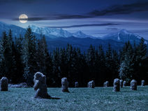 Haystack near forest on a meadow in Tatras at night Stock Image