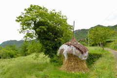 Haystack after the rain. Countryside landscape with haystack in the spring after the rain with a tree behind it Royalty Free Stock Photography