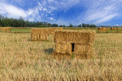 Haystack or rice straw bales in harvested fields Stock Photo