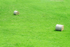 Haystack rolls on green grass Royalty Free Stock Photos