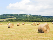 Haystack rolls on harvested field in Normandy. France stock photo