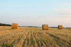 Haystack. Stock Images