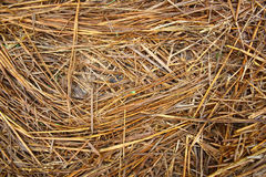 Haystack Texture Background. Hay straw textured background. Hay is used to feed when or where there is not enough pasture or rangeland on which to graze an Royalty Free Stock Images