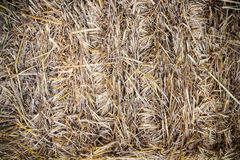 Haystack texture background Royalty Free Stock Photos
