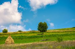 Haystack and a tree on the grassy field. Beautiful summer countryside of mountainous area Royalty Free Stock Image