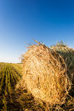 Haystack in wheat field Royalty Free Stock Images