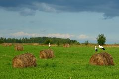 haystacks птиц Стоковые Изображения RF