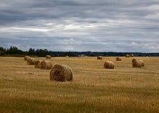 haystacks Русское поле overcast стоковые фотографии rf