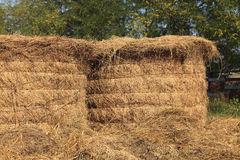 Haystacks. Storage with a pile of haystacks Stock Photos